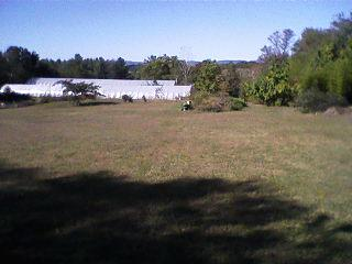 A view of the gardens from the deck on the back of the house